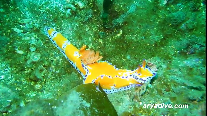 Khám phá vẻ đẹp của những loài sên biển mà bất cứ ai cũng muốn nuôi làm thú cưng