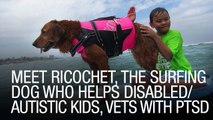 Meet Ricochet, The Surfing Dog Who Helps Disabled/Autistic Kids, Vets With PTSD