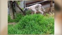 Chien chiens aide sans abri besoin notre pauvre histoire rue blanc transformation