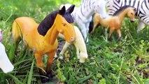 Animales país país vacas perro granja caballos Niños pavo real rompecabezas Gallo sorpresa para juguetes 9 3d
