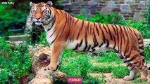 Learn Animals Names And Sounds For Children | Farm Animals | Wild Animals | Sea animals |