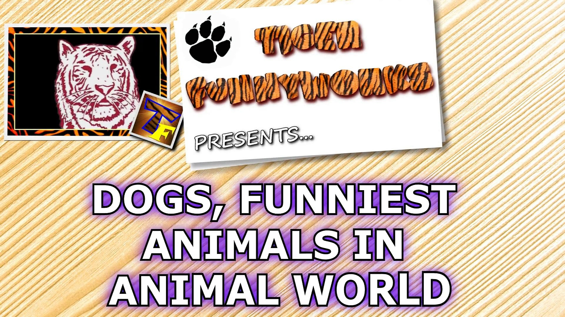 Dogs, the funniest animals in animal world - Funny dogs compilation