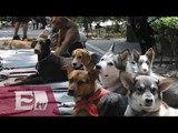 Perros capitalinos víctimas de secuestro/ Comunidad