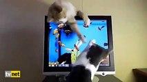 Ekrandaki Balıkları Yakalamaya Çalışan Sevimli Kediler
