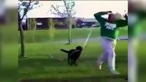Un chien court après son maître avec un tuyau d'arrosage !