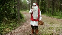 Reindeer of Santa Claus in Lapland Finland - secrets of Father Christmas reindeer in Rova
