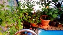 Pour et №2 lexpérience dun système hydroponique maison de légumes verts de plus en plus