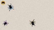Et chat contagieux chats chiens Divertissement pour des jeux araignées à Il vidéo regarder