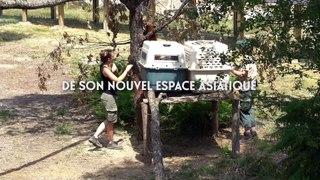 Nouvel espace asiatique à la Réserve Zoologique de la Haute-Touche
