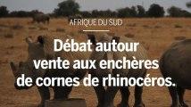 Afrique du Sud : débat autour d'une vente aux enchères de cornes de rhinocéros
