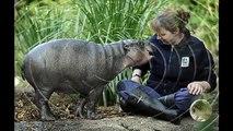 Y los más increíbles pocos animales inusuales de nuestro planeta