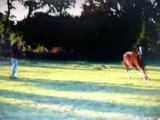 cheval longe