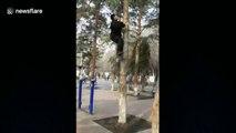 Ce maître Kung Fu grimpe 10m d'arbre en 5 secondes à mains nues !!