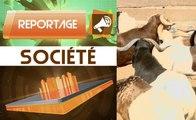 Tabaski 2017/ Abattoir de Port-bouët, ce qui fait flamber le prix des moutons