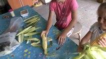 Blé enfants écaillage avec vlog mer ☼ enfants se brossent les délicieux maïs sucré ☼ Krynica 2016