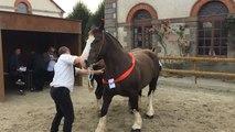Concours départemental de trait breton