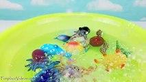 Animaux bulle doris découverte pistolet enfant Apprendre apprentissage des noms de de piscine Mer jouet jouets vers le haut en haut vent nemo
