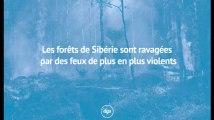 Réchauffement climatique : les forêts de Sibérie sont ravagées par des feux de plus en plus violents