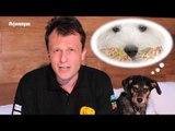 Pet na Pan #02 - Cinco problemas que o sobrepeso pode causar em seu cãozinho | Jovem Pan