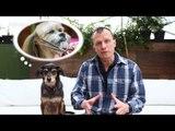 Pet na Pan #09   Cinco cuidados com o seu pet no inverno