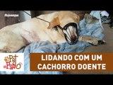 Pet Na Pan #24 - Lidando com um cachorro doente