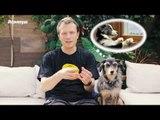 Pet Na Pan #31 - Cinco cuidados com filhotes dentro de casa