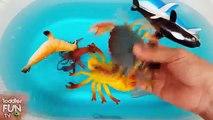Apprendre Mer animaux des noms jouets vidéo requin attaque apprentissage enfants enfants tout petit main fantoche