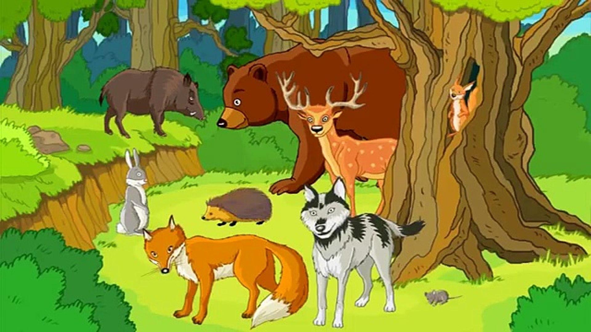 Niños para animales animales del bosque ||