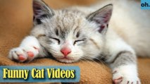 Cat Videos - Funny Cats - Funny Cat Videos - Kitten Videos - Funny Kitty Videos - Cats For Pets - P5