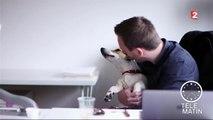 Psycho - Au bureau avec mon chien, je vais bien !