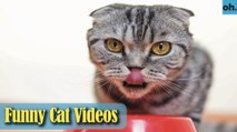 Cat Videos - Funny Cats - Funny Cat Videos - Kitten Videos - Funny Kitty Videos - Cats For Pets - P6