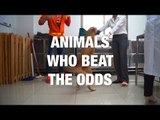 Awesome Animals Who Beat the Odds