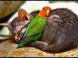❤️ الحيوانات أصبحت أرحم من البشر في زماننا