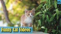 Cat Videos - Funny Cats - Funny Cat Videos - Kitten Videos - Funny Kitty Videos - Cats For Pets - P7