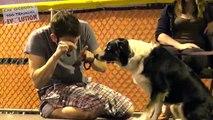 Chien chiens pour gratuit obéissance conseils entraînement 101