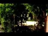 Wriggles - Teaser Album Tant Pis,Tant Mieux 1
