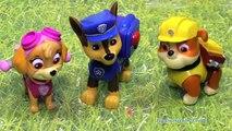 Una y una en un tiene una un en y de fangoso patrulla pata cerdo charco ahorra v