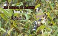 Les animaux en farandole: saison 1: épisode 9