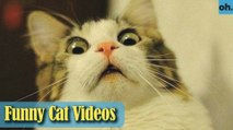 Cat Videos - Funny Cats - Funny Cat Videos - Kitten Videos - Funny Kitty Videos - Cats For Pets - P8