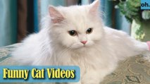 Cat Videos - Funny Cats - Funny Cat Videos - Kitten Videos - Funny Kitty Videos - Cats For Pets P10