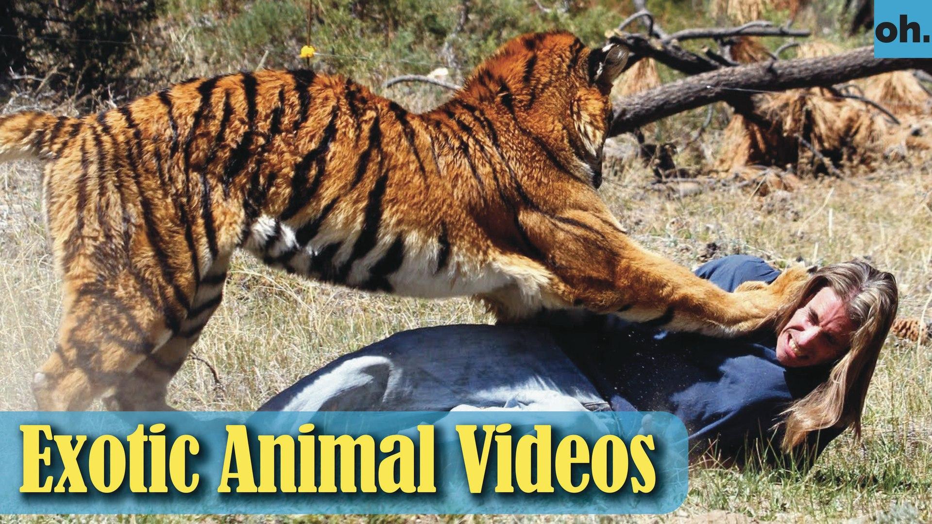 Animal Video - Endangered Animals - Extinct Animals - Rare Animals Zoo - Exotic Animals For Sale P3