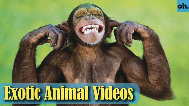 Animal Video - Endangered Animals - Extinct Animals - Rare Animals Zoo - Exotic Animals For Sale P5