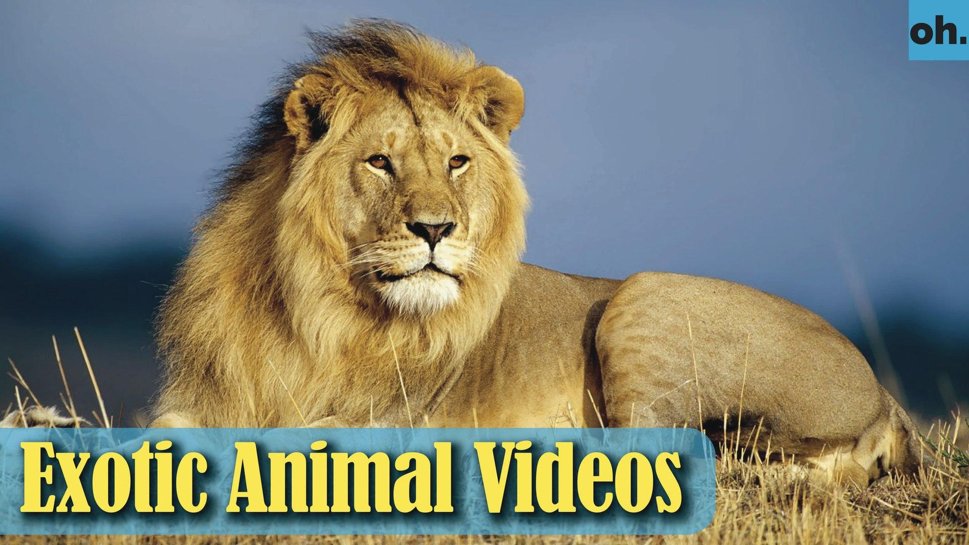 Animal Video - Wild Animals - Rainforest  Animals - Rare Animals Zoo - Exotic Animals For Sale P2