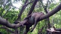Et animaux banane mignonne en train de manger drôle singe animaux domestiques compilation