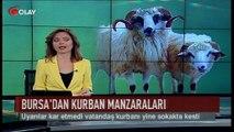 Bursa'dan kurban manzaraları (Haber 01 09 2017)