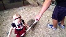Cette tortue a décider de dévorer cette fillette... Ahaha trop mignon