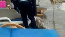 Pervane Yarası Alan Caretta Caretta'nın Ölüsü Sahile Vurdu