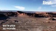 L'étonnante floraison du désert d'Atacama au Chili