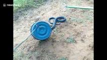 Libération d'un serpent Black Mamba de 2m... il manque d'attaquer ses libérateurs !