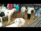 Tezabi Totay Bakra Eid All Funny Special Funny Punjabi Totay - Dailymotion